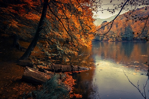 proposal ideas by the lake autumn