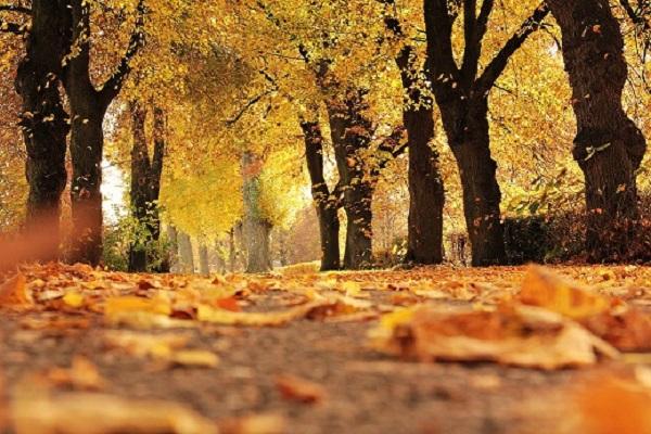 woodland autumn proposal ideas